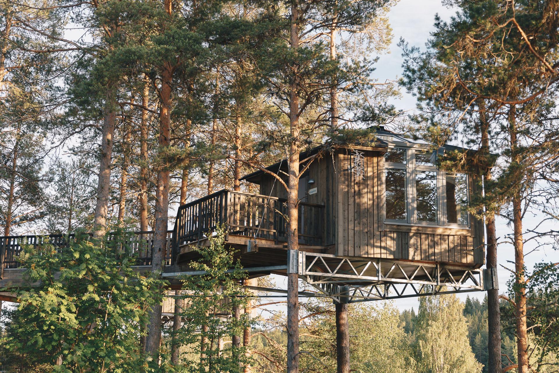 Granö Beckasin - Boende i fågelnäste bland trädtopparna