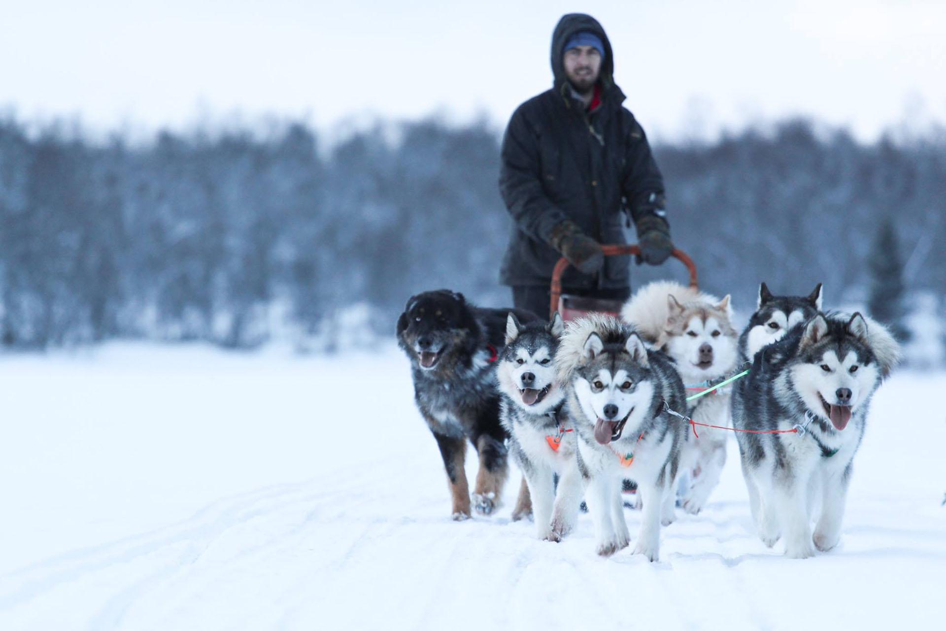 Hundspann med Peder Karlsson Upplevelser