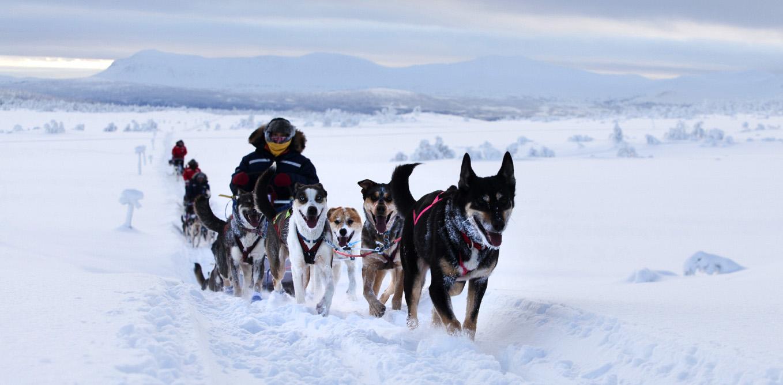 The Silent Way Hundspann
